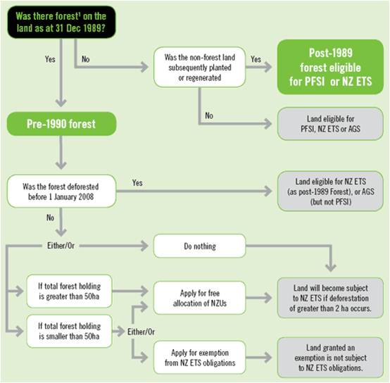 Forest Decision Tree